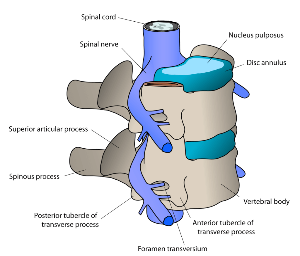Image of spine area