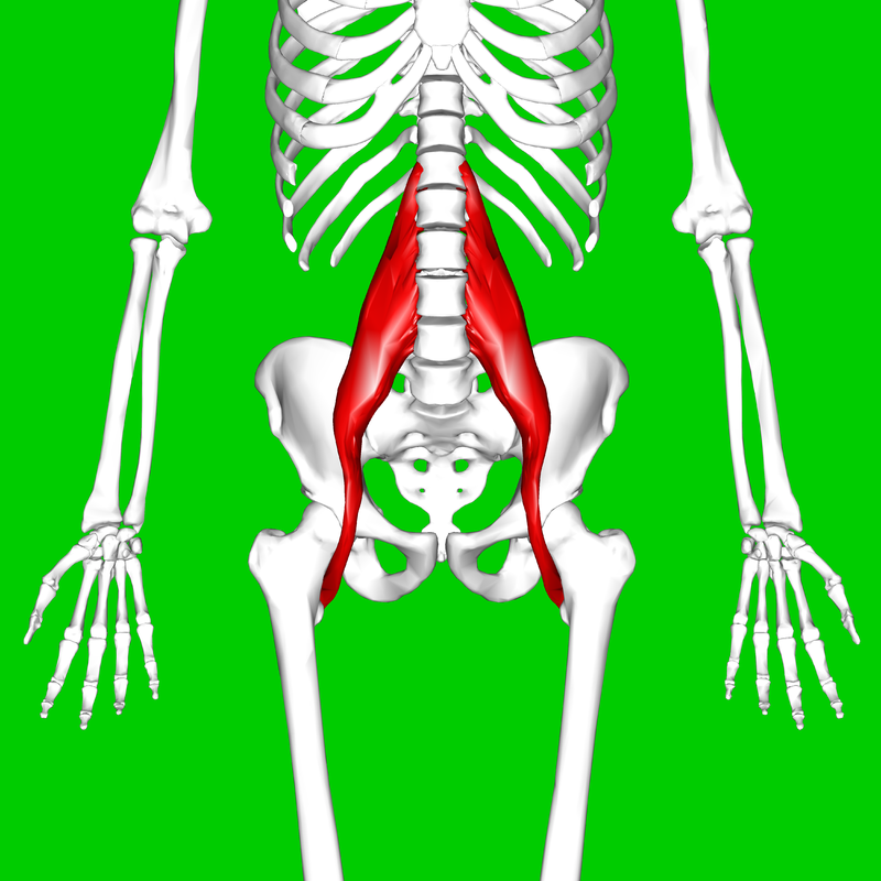 Psoas Muscle Location